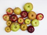 Heirloom Varieties of Apples Photographic Print by Rebecca Hale