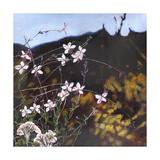 Provencal Garden I, 2014 Giclee Print by Helen White