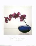 Orchids (1985) Kunstdrucke von Robert Mapplethorpe