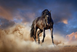 Black Stallion Horse Photographic Print by  Callipso88