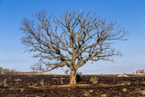Oak Tree Photographic Print by  dendron