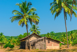 Abandoned Building in A Coconut Grove in the Tropics Photographic Print by Labunskiy K