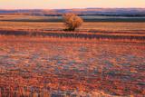 Kansas Sunset Fotodruck von  photojohn830