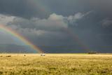 Sun Shining on Grassland under Storym and Rain Photographic Print by  BackyardProductions