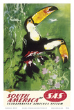 South America - Tocu Toucans - SAS Scandinavian Airlines System Prints by Otto Nielsen