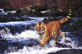 Tiger in Fast-Flowing Stream (Captive Animal) Photographic Print by Lynn M. Stone