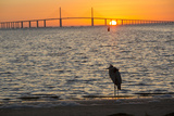 Bird Silhouetted in Front of Bridge Photographic Print by Lynn M. Stone