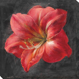 Vivid Floral 3: Amaryllis Stretched Canvas Print by  Nai