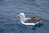 Albatros Walvis Whale Photographic Print by  B-N-N