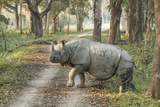 Rhino Photographic Print by Vikramjit Kakati