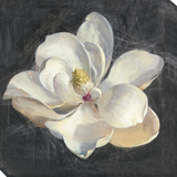 Vivid Floral 4: Magnolia Stretched Canvas Print by  Nai