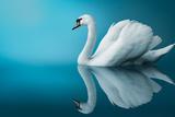 Swan Impressão fotográfica por  artfotodima
