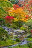 Fall Colors Rocky Stream Fotografisk trykk av  dplett