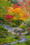 Fall Colors Rocky Stream Photographic Print by  dplett