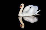 Swan with Reflection Photographic Print by Alan Tunnicliffe