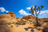 Joshua Tree National Park Jumbo Rocks in Yucca Valley Mohave Desert California USA Photographic Print by  holbox
