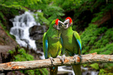 Parrot against Tropical Waterfall Background Stampa fotografica di  byrdyak