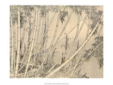 Japanese Bamboo in the Mountains Print