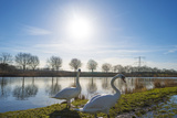 Swan on the Shore of a Sunny Canal in Winter Photographic Print by Jan Marijs