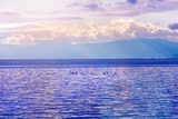 Swans on Water at Sunset Lighting Impressão fotográfica por  Dashabelozerova