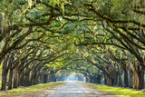 Savannah, Georgia, USA Oak Tree Lined Road at Historic Wormsloe Plantation. Photographic Print by  SeanPavonePhoto