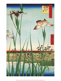 Irises at Horikin from One Hundred Famous Views of Edo Prints by Utagawa Hiroshige