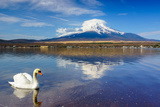 White Swan with Mount Fuji at Yamanaka Lake, Yamanashi, Japan Photographic Print by  lkunl