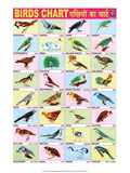 Indian Educational Chart - Birds Affiche