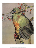 Bird Illustration, The Guan, 1899 Print by Edward Detmold
