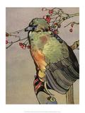 Bird Illustration, The Guan, 1899 Print by Edward Detmold