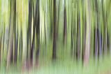 Woodland Whirl Giclee Print by Lee Frost