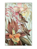 Bird Illustration, Catasetum & Cypripediums, 1912 Poster by Edward Detmold