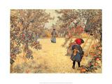 Gathering Apples, 1904 Prints by Carl Larsson