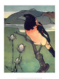 Bird Illustration, The Oriole, 1899 Prints by Edward Detmold