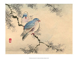 Japanese Blue Headed Doves Prints by Haruna Kinzan