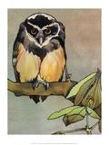 Bird Illustration, The Owl, 1899 Posters van Edward Detmold