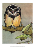 Bird Illustration, The Owl, 1899 Prints by Edward Detmold