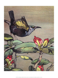 Bird Illustration, The Hummingbird, 1899 Prints by Edward Detmold