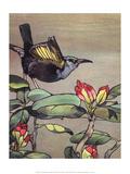 Bird Illustration, The Hummingbird, 1899 Prints by Edward Detmold