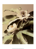 Lotus Flower, Vintage Japanese Photography Prints by Ogawa Kasamase