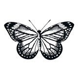 Butterfly II Giclee Print by Clara Wells