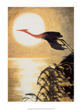 Stork Flying in Moonlight Prints
