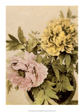 Peonies, Vintage Japanese Photography Posters by Ogawa Kasumasa