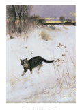 Cat Stalking over Snow, 1884 Posters by Bruno Liljefors