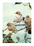 Bird Illustration, The Willow Warbler Posters by Edward Detmold