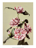 Camellia, Vintage Japanese Photography Prints by Ogawa Kasamase