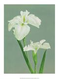Iris, Vintage Japanese Photography Poster by Ogawa Kasamase