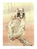 Bird Illustration, The Long - Eared Owl Art by Edward Detmold