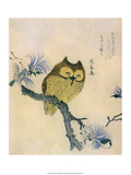 Japanese Owl on a Branch Posters