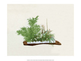 Ikebana, Bamboo, Chrysanthemum, Plum & Orchid Posters by Josiah Conder